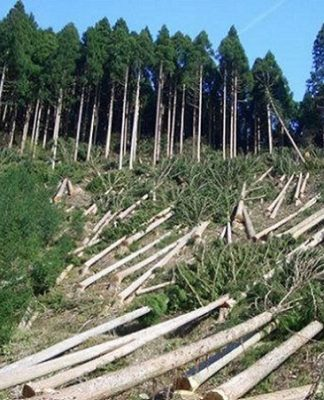 the global depletion of forests Essays - largest database of quality sample essays and research papers on cause and effect of forest depletion the effects of global warming on rain forests.