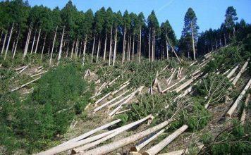 Rainforest Depletion
