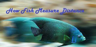 Fish Measure Distance