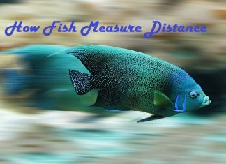 Fish Measure Distance