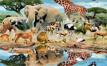 Dangerous Animals on the Globe