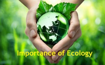 why is ecology important