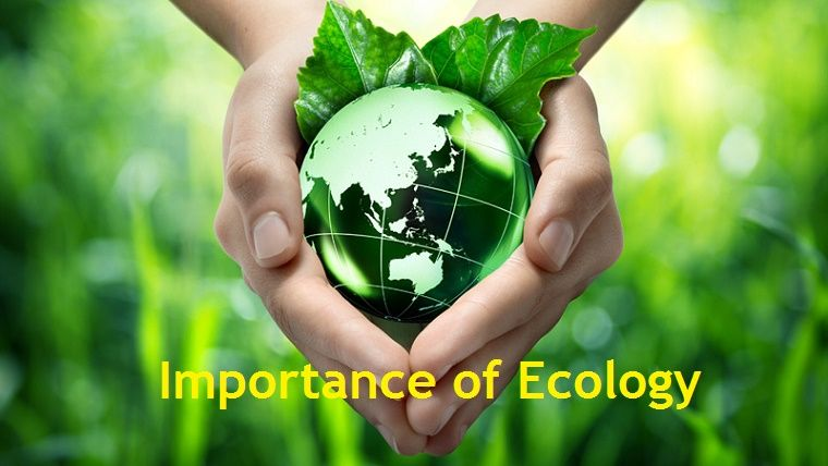 Ecology - ppt download
