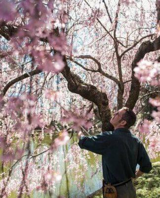 Types of Cherry Tree
