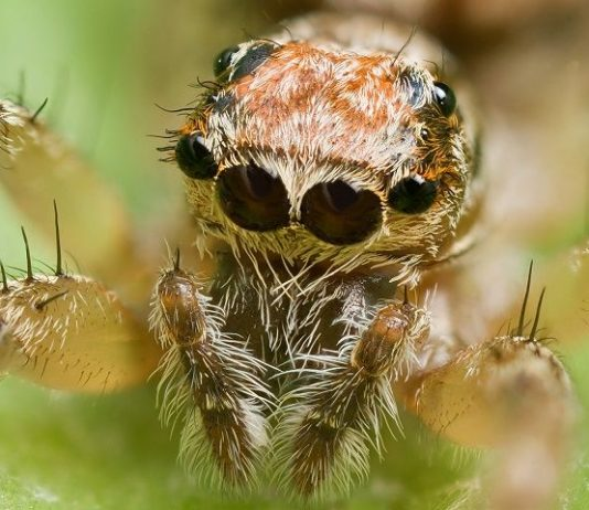 Different Types of Spiders