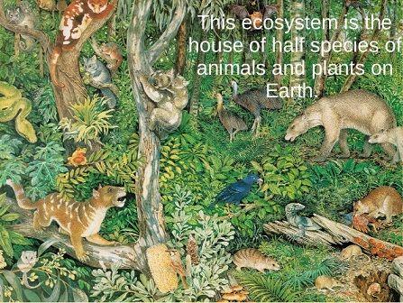 earth ecosystem