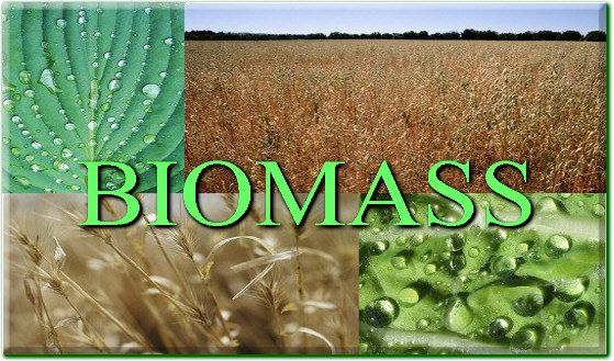 Definition of Biomass