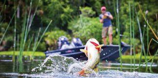 bass fishing reports alabama