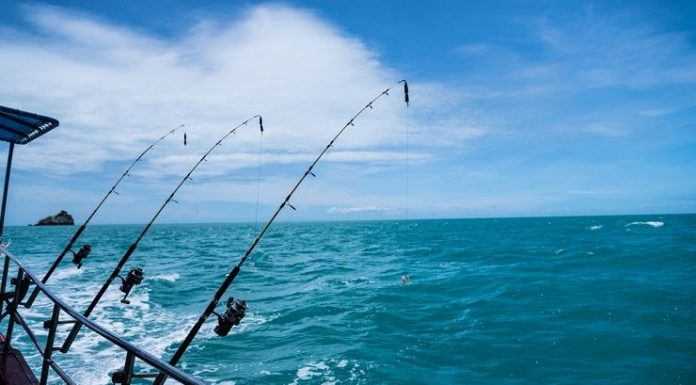 saltwater fishing rods reviews