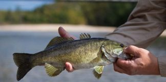 how to catch smallmouth bass