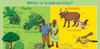 meaning of biodiversity