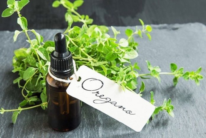 best wild oil of oregano