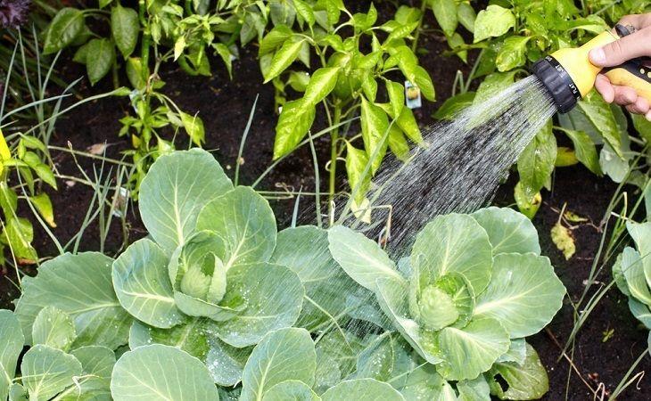 Best Soaker Hose For Your Garden